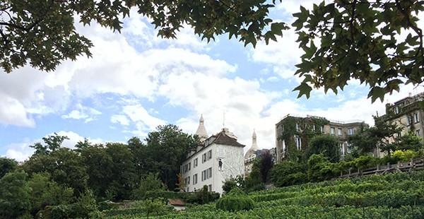 Une tradition préservée, la vigne de Montmartre